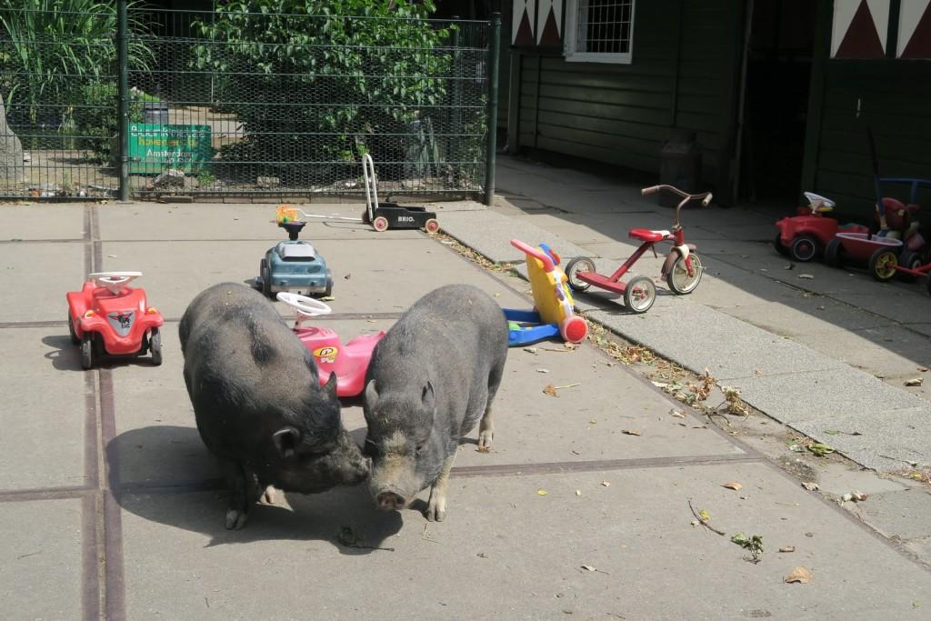 Amsterdam with kids - Kinderboerderij De Werf Kids Petting Zoo pigs